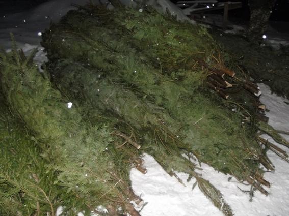 Ялинковий браконьєр на Воловеччині тримав дерева в машині