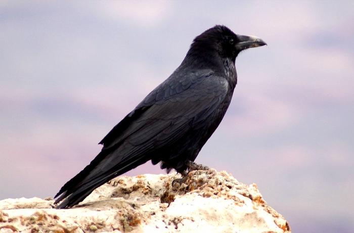 Жертви негоди. Град на Закарпатті поранив багато птахів