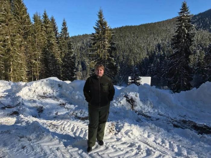Більше 2-х з половиною тисяч новорічних ялинок підготували лісівники Тячівщини