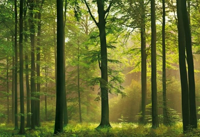 На Закарпатті — найстаріші ліси в Україні