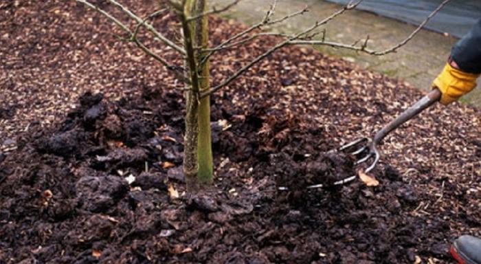 Як та чим підживляти сад восени?