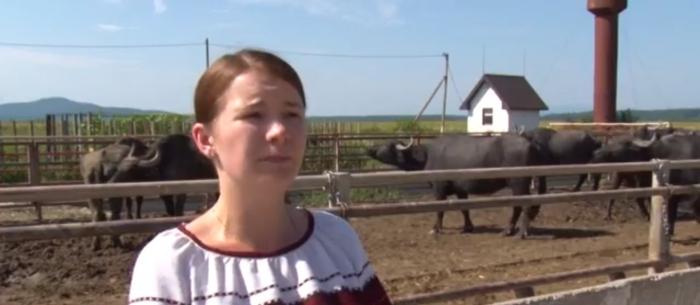 Закарпатська моцарелла з буйволячого молока: як працюють фермери на Виноградівщині