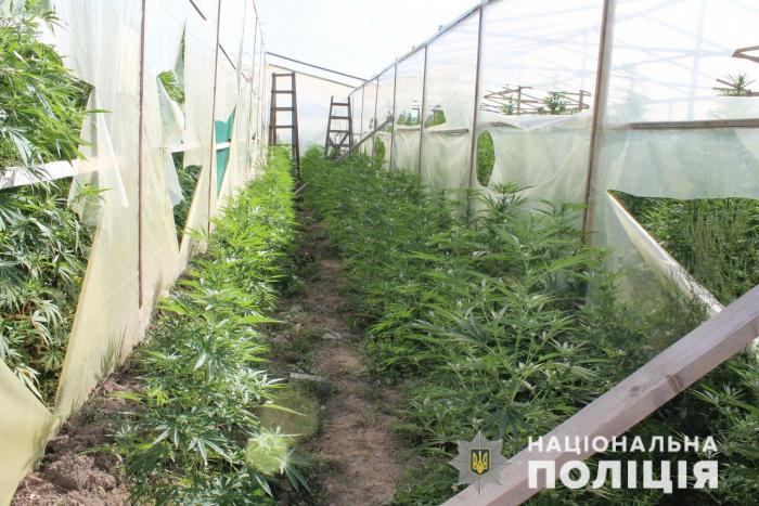Наркотичне Закарпаття: 3 тисячі нарковмісних рослин та 134 кілограми марихуани вилучили поліцейські