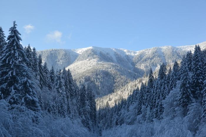 Неймовірної краси зима на Міжгірщині: від снігопадів смереки і гори стали ще більш казковими