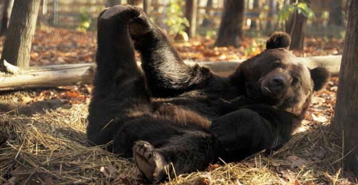 Зоопарк Ніредьгаза – все що треба знати закарпатцям перед візитом