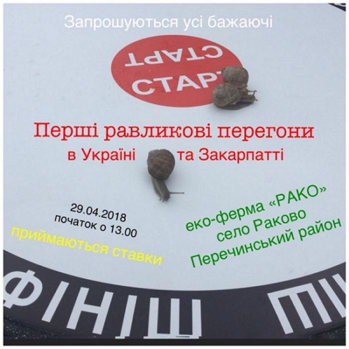 Перші в Україні перегони равликів відбудуться на Закарпатті