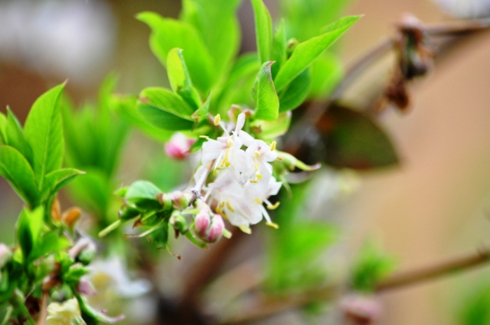 Рожевий, білосніжний, жовтий, фіолетовий – квітучий Ужгород зустрічає Великдень