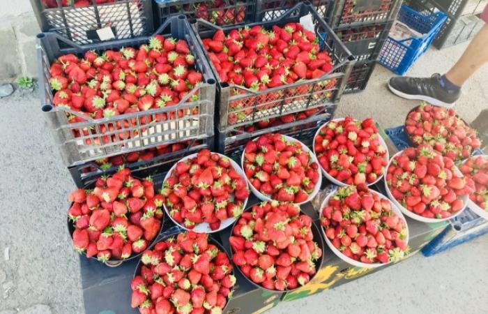 Полуничний сезон на Закарпатті: ягід все більше, ціни все нижче