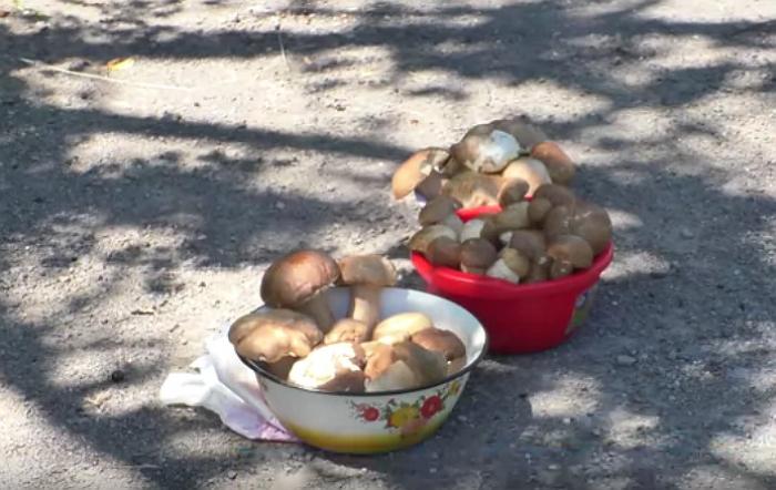 Перші літні гриби бувають вкрай небезпечними для життя!