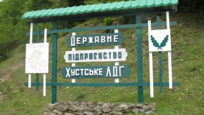 Лісівники Хустщини завдали шкоди лісу на 237 тис грн, оштрафовано 61 особу