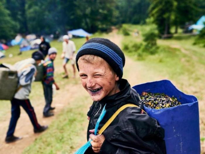 Жителі гірських районів Закарпаття масово збирають яфини, аби трохи підзаробити