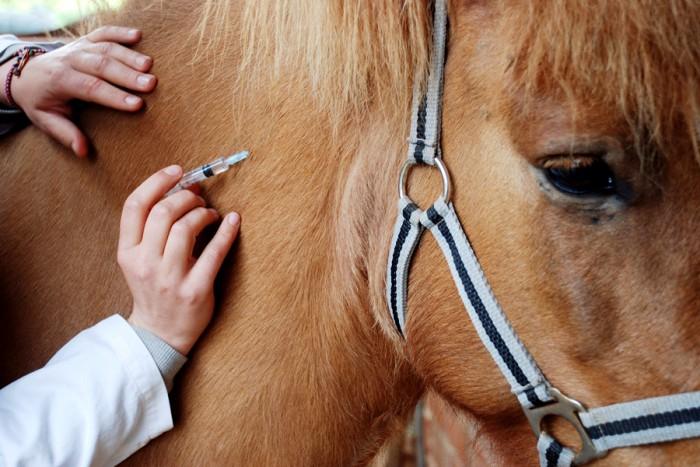 Сім'ї з Рахівщини, коня якої травмував п'яний нелюд, буде компенсовано матеріальну шкоду