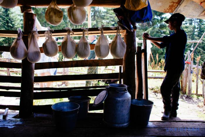Високо в горах: Як закарпатські вівчарі на Підпулі сир варять (ФОТО)