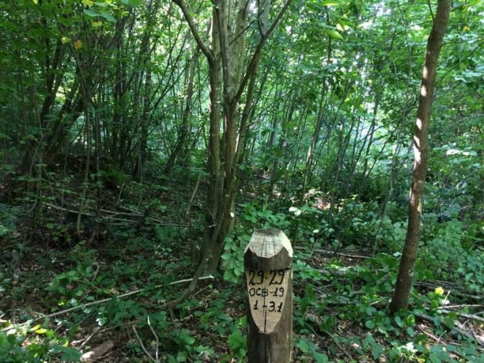 Лісівники Хустщини запланували цьогоріч провести рубки догляду на площі 167,9 га