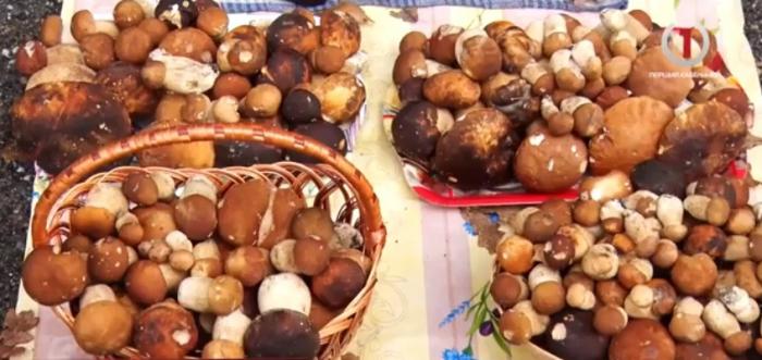 Тихе полювання: реалії грибного бізнесу на Берегівщині