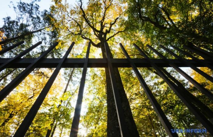 Історик: Паркана навколо Невицького замку не повинно бути