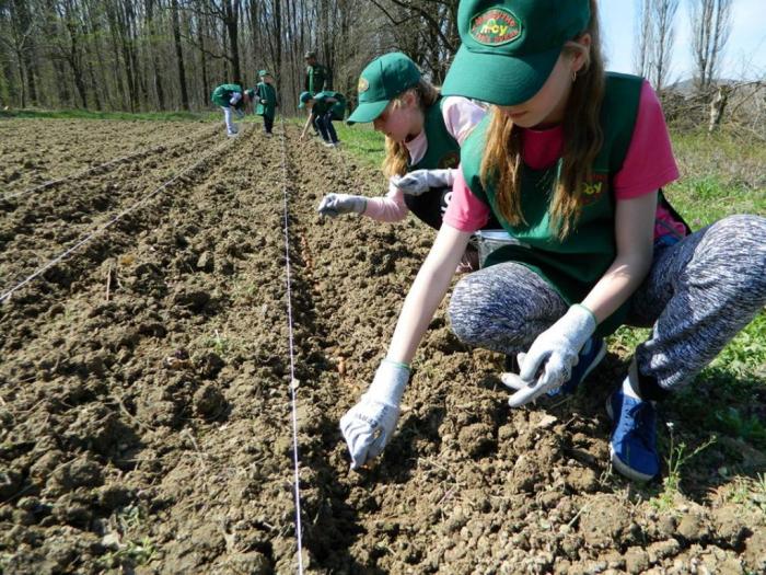 Лісівники Берегівщини запевняють, що заліснять майже 33 гектари молодими лісами