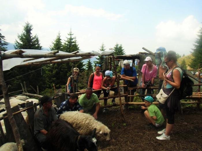 Туристів у Карпатах вчать вівчарству та секретам приготування бринзи
